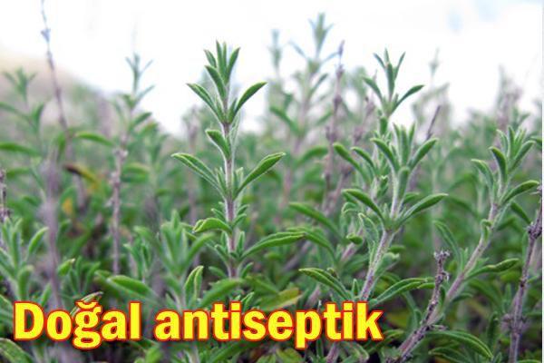 Antibiyotik-Antifungal-Antimikrobiyel-Antioksidatif-Antiseptik