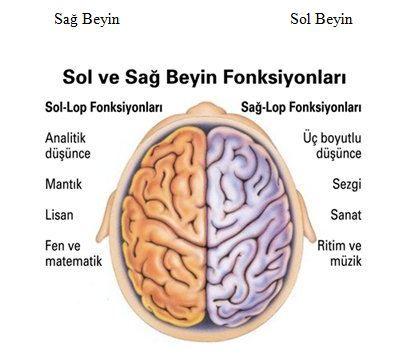 beyin-sag-sol