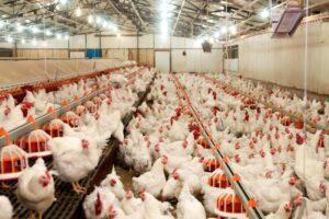 Kümes Hayvancılığı Üretimi Temmuz 2019 Verileri