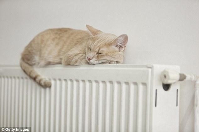 Evinizi Sıcak Tutmak İçin-Kedi
