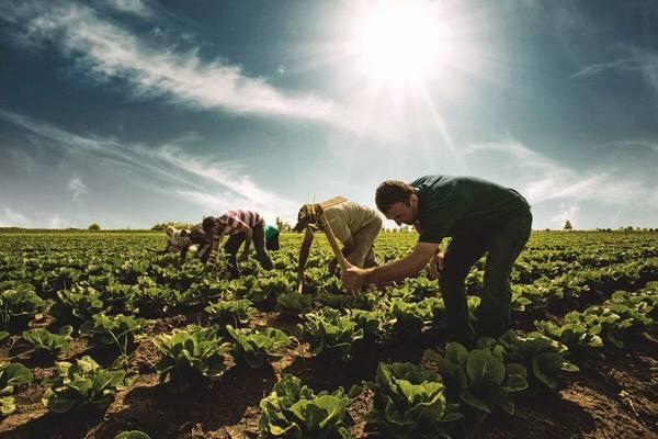 Tarımda Kooperatifleşme