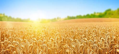 Tarımda Kooperatifleşmenin Önemi