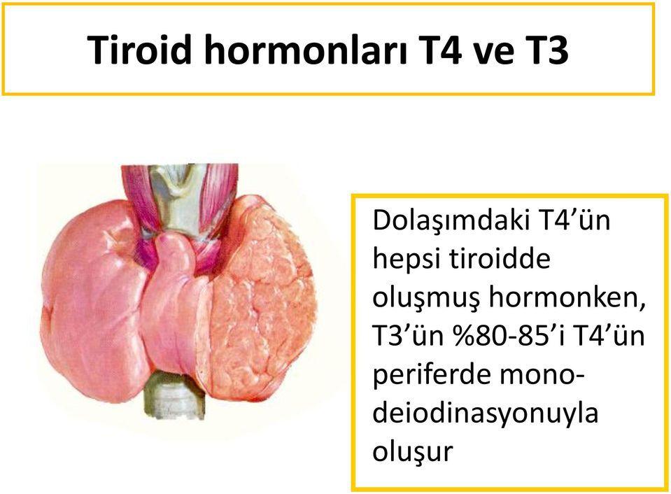 Tiroid Bezi Hastalıkları-Tiroid hormonları