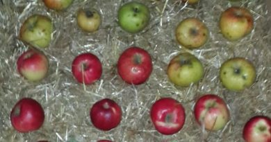 dogal-elma