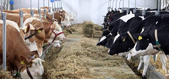 Süt Üretimindeki Azalış