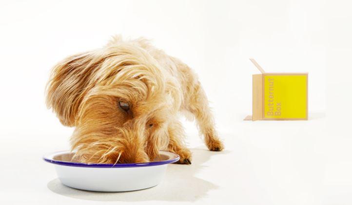 Köpekler İçin Sağlıklı Gıda Dağıtım Hizmeti