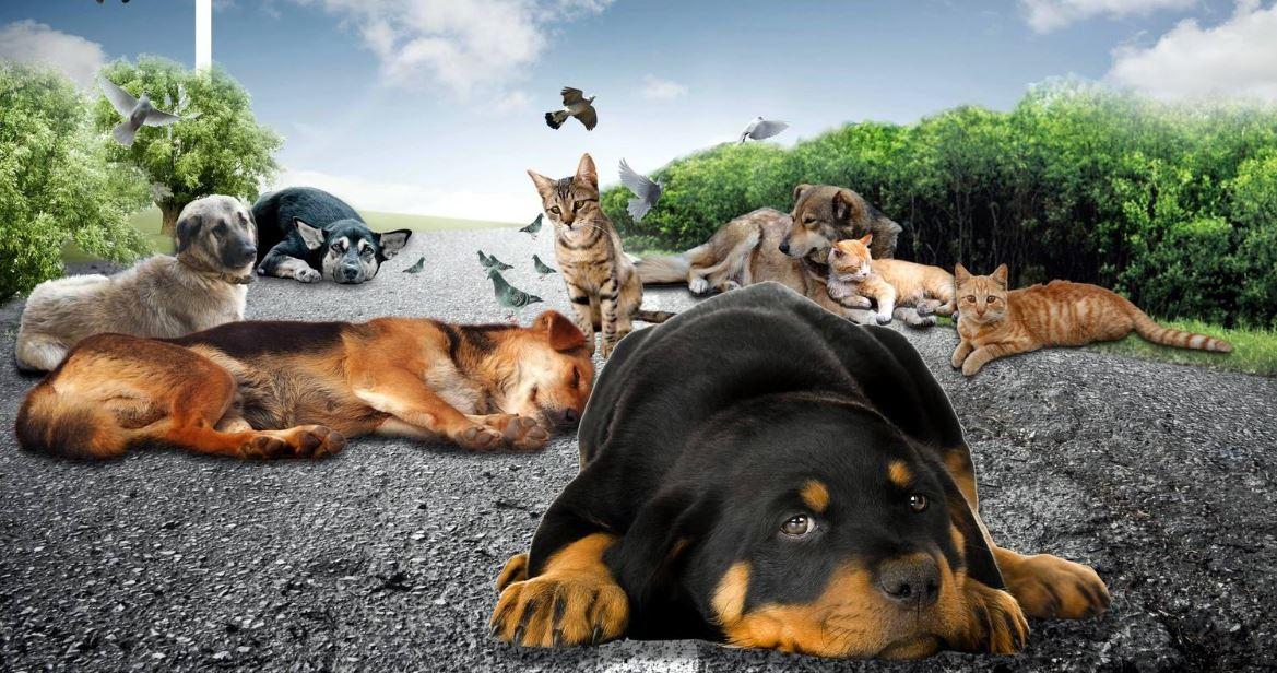 sokak-hayvanlari-toplaniyor