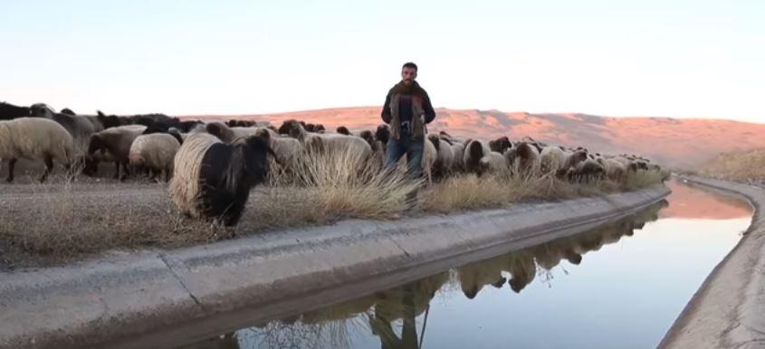 Van'da Çobanlık İşi