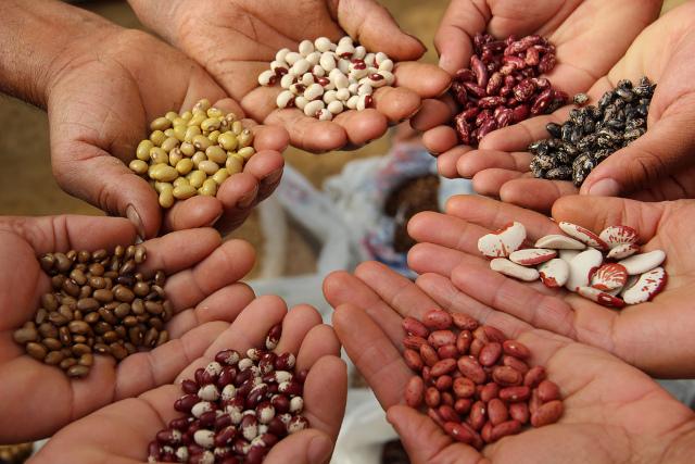tohumlar