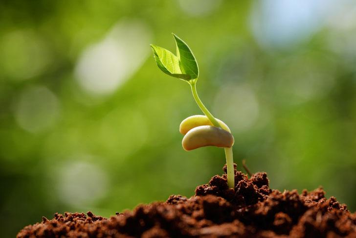 Yerli Tohum Üretiminin Önemi