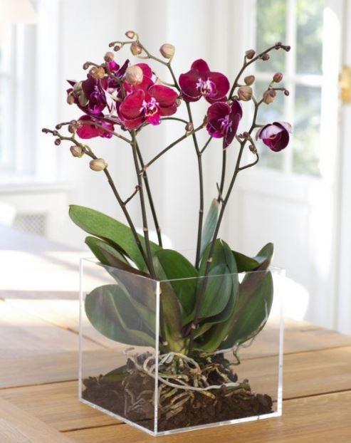 orkide-bakimi