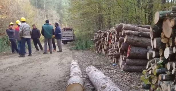 Kocayazı Köyü Orman İşçilerinin Zorlu Hayatları