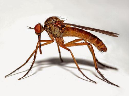 Sıtma Hastalığının Ölümcül Etkisi