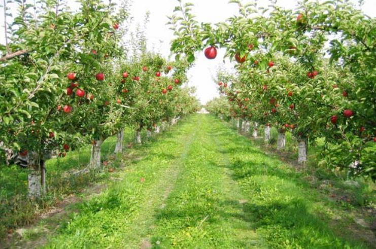 Renkli Meyve Bahçesi