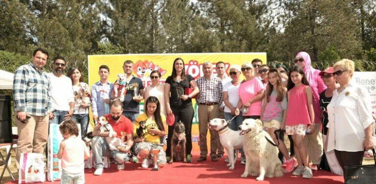 Beykoz Belediyesinin Sokak Hayvanlarını Koruması
