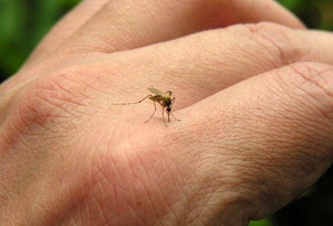 Sivrisineklerden Korunmanın Yolları ve Sineksavar Yapımı