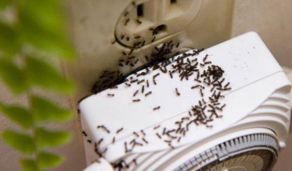 Karınca Uzaklaştırma