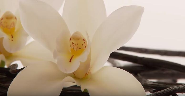 Vanilya Bitkisinin Asıl Değeri