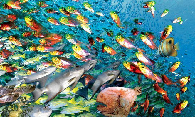 Deniz Balıkları ve Çiftlik Balıklarının Farkları Neler?