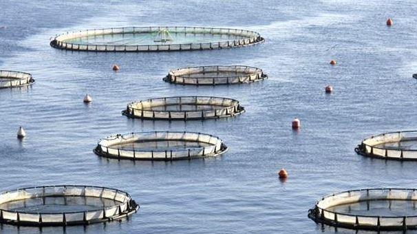 Deniz Balıkları ve Çiftlik Balıklarının Farkları