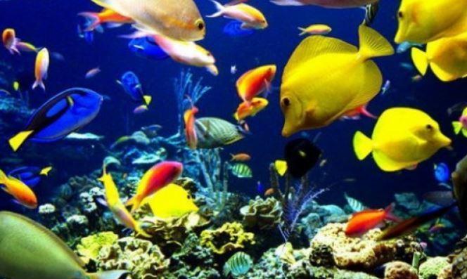 Deniz Balıkları ve Çiftlik Balıkları
