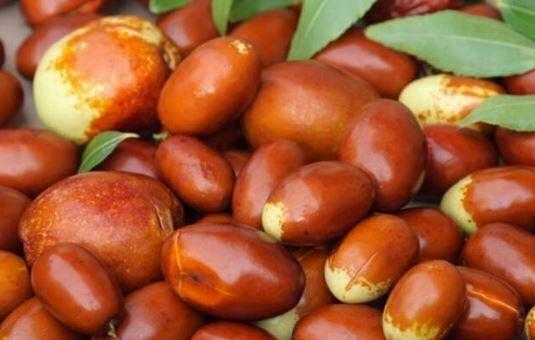 Meyvename Kitabından Birkaç Meyve