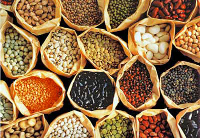 Buğday Tohumu Üretimi ve Hibrit Tohum Hakkında Röportaj