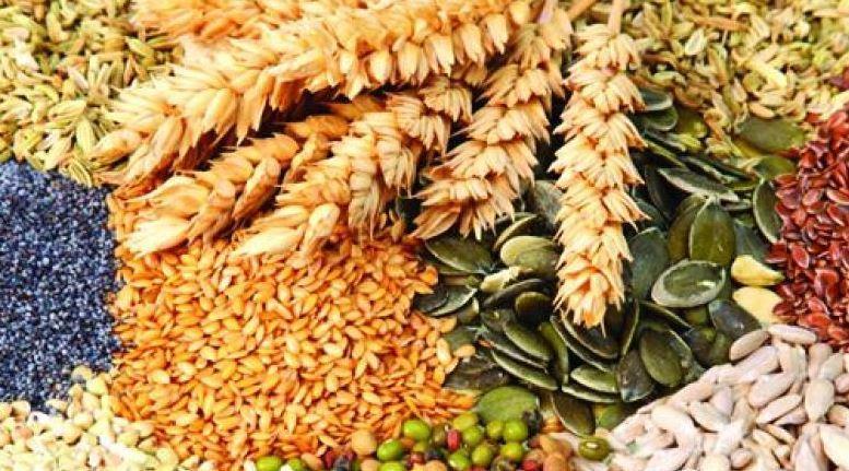 Hibrit Tohum Nasıl Üretiliyor?