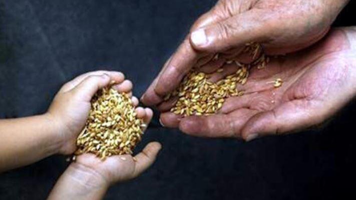 Hibrit Tohum Nasıl Üretiliyor? Tohum Takas Şenliği