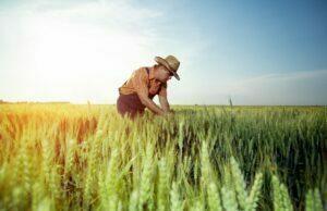 Milletlerin Dünden Bugüne Tohum Üretimi