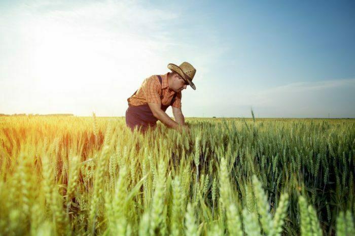 Milletlerin Dünden Bugüne Tohum Üretimindeki Değişimleri