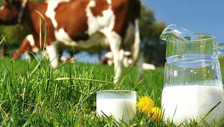 İlk Gıdamız Süt