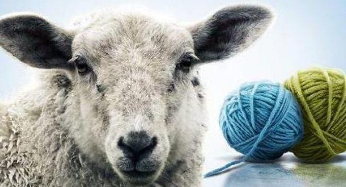 Koyun Yünü Kullanımı