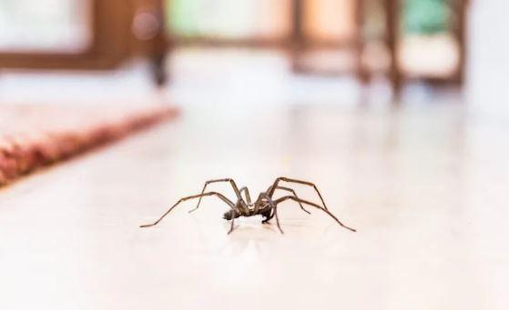 Örümcekleri Evden Uzak Tutma